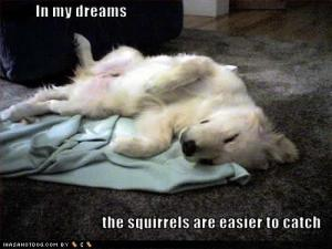 funny-dog-pictures-dreams-squirrels