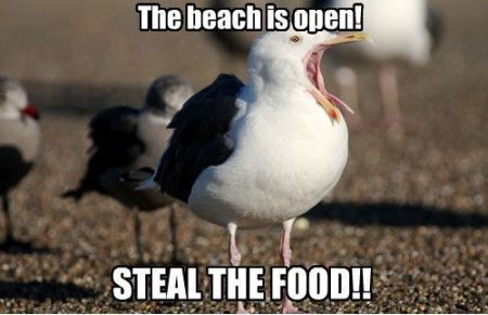 Funniest_Memes_the-beach-is-open-steal-the-food_10606
