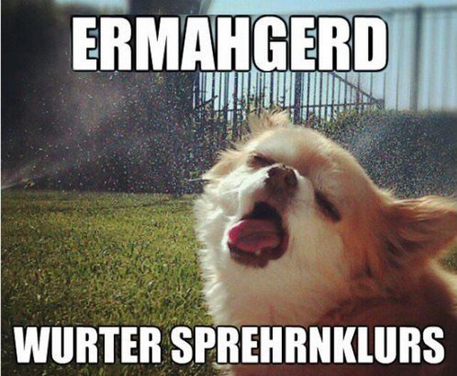 Funny Hot Dog Meme : Happy summer meme monday trish marie dawson